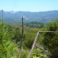A view across Sonoma Valley to the Mayacamas Mountains from Jack London State Park.