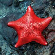 A starfish in a Northern California tide pool.