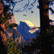 Half Dome in Yosemite as soon through trees.