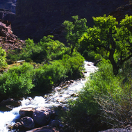 Tapeats Creek in the Grand Canyon.