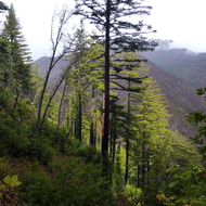 A view from the trail into the Ventana Wilderness in Big Sur.