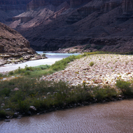 The confluence of the Little Colorado and mainstem Colorado River.