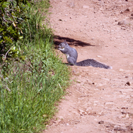 A squirrel on the Sonoma Overlook Trail.
