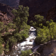 The awesome Tapeats Creek in the Grand Canyon.