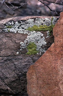 Thumbnail image ofLichen on sandstone rocks in the Grand Canyon.