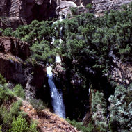 Thunder River Falls in the Grand Canyon.