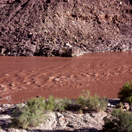 A muddy Colorado River in the Grand Canyon.