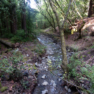 A creek in North Sonoma Mountain Regional Park.