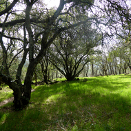 Spring on the Montini Open Space Preserve in Sonoma.