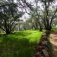 The Holstein Hill Trail in Spring on the Montini Open Space Preserve in Sonoma.