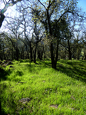 Thumbnail image ofThe Montini Open Space Preserve in Spring.