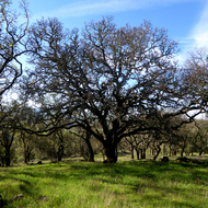 The Montini Open Space Preserve in Spring.