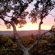 Sunset over Sonoma Valley, from a treehouse at the top of an oak tree.