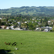 Overlooking the Montini cow pasture in Spring from the Holstein Hill Trail on the Montini Open Space Preserve.