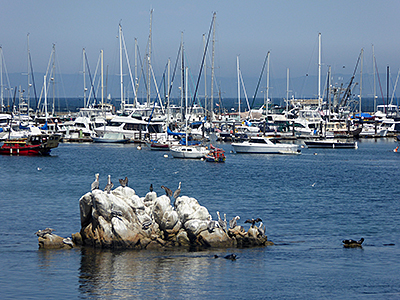 Thumbnail image ofBoats and birds: A typical Monterey harbor scene.