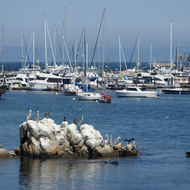 Boats and birds: A typical Monterey harbor scene.