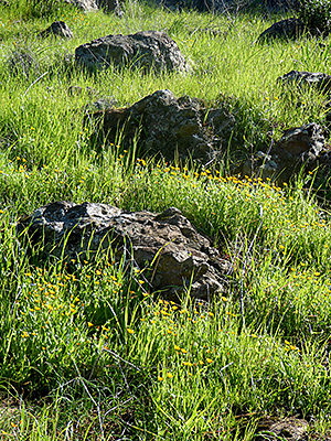 Thumbnail image ofRocks and flowers in early spring in Sonoma County.
