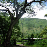 A ranch in the Waipi'o Valley.