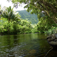 The Wailoa Stream in the Waipi'o Valley.