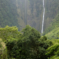 Waihaloa Falls in the Waipi'o Valley.