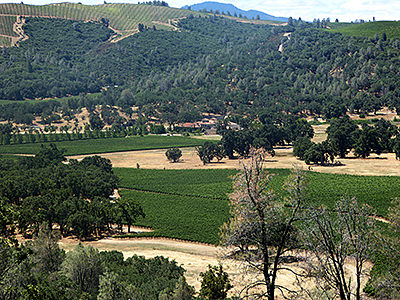 Thumbnail image ofA view of vineyards and Brassfield Estate Winery...