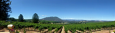 Thumbnail image of A panoramic view of vineyards and Mt. Konocti...