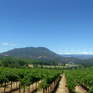 A panoramic view of vineyards and Mt. Konocti in Lake County, California from a winery.