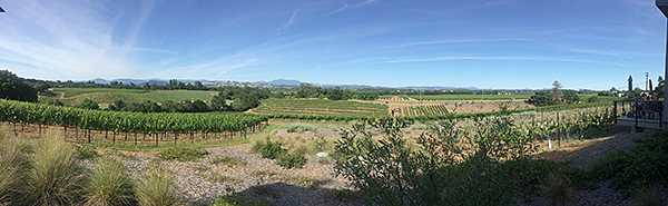 Thumbnail image of A panorama of vineyards in Lake County, California.