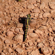 A dragonfly resting on a trail.
