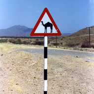 Camel Crossing Sign - Sumail, Oman