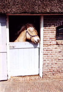 Thumbnail image ofHorse in Stable - the Netherlands