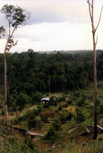 Thumbnail image ofFarm in Jungle Clearing - Brunei