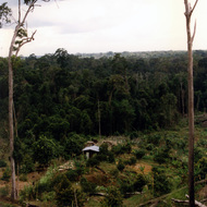 Farm in Jungle Clearing - Brunei