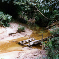 Jungle Stream - Brunei