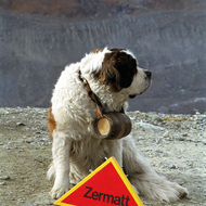 St. Bernard Dog - Gornergrat, Switzerland