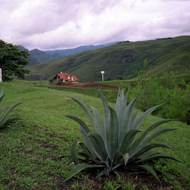 Large Agave in Bolivia.