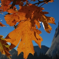 Yosemite fall colors.