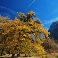 Yosemite, El Capitan meadow, autumn color.