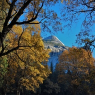 Yosemite fall color in Stoneman Meadow.