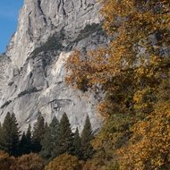 Yosemite, El Capitan meadow.