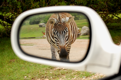 Thumbnail image ofStripes in the mirror.