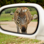 Stripes in the mirror.