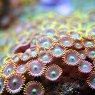 Crazy Color in the Corals