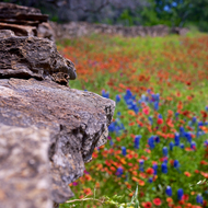 Rock Wall and Wildflowers.
