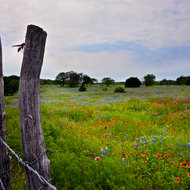 Texas Barbed Wire