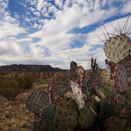 Cactus with Chisos