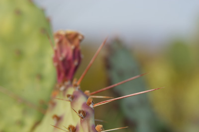 Thumbnail image ofWhy it's prickly.