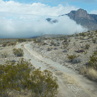 Guadalupe Mountains National Park jeep road.