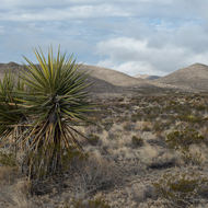 Guadalupe Mountains National Park desert plants.