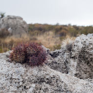 Rocks and Colorful Cactus.